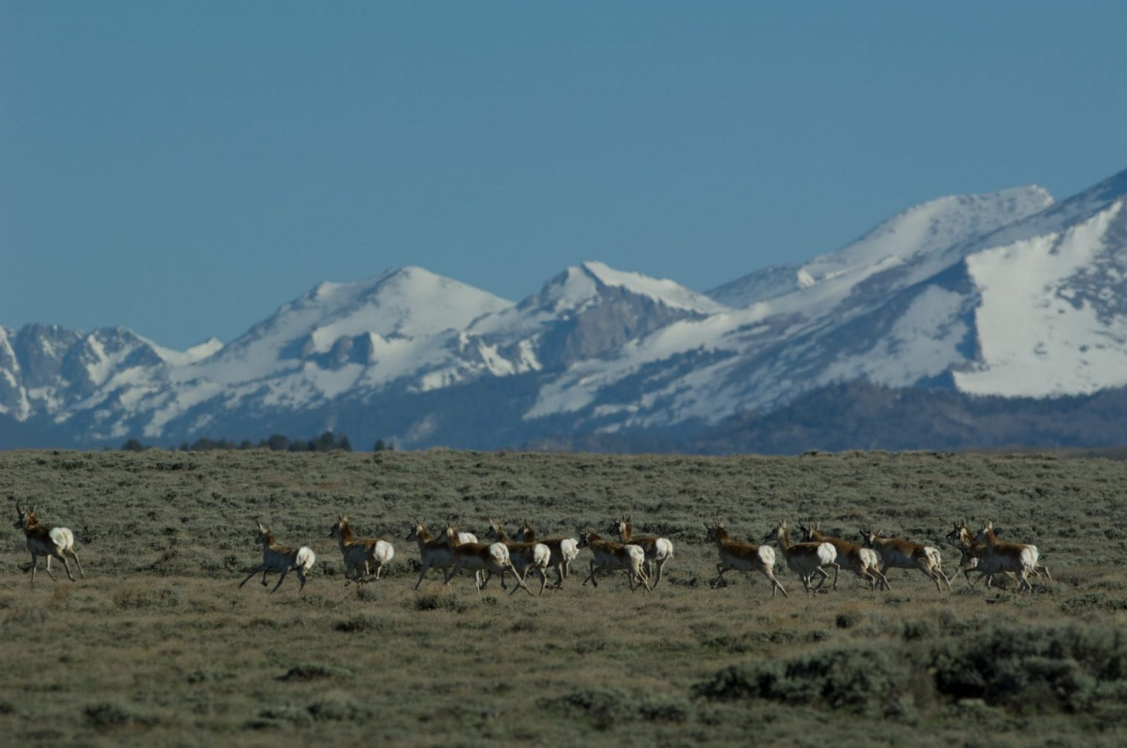 Big Game Migrations and Wilderness: See Their Connection in This New Video From Wyoming Migration Initiative