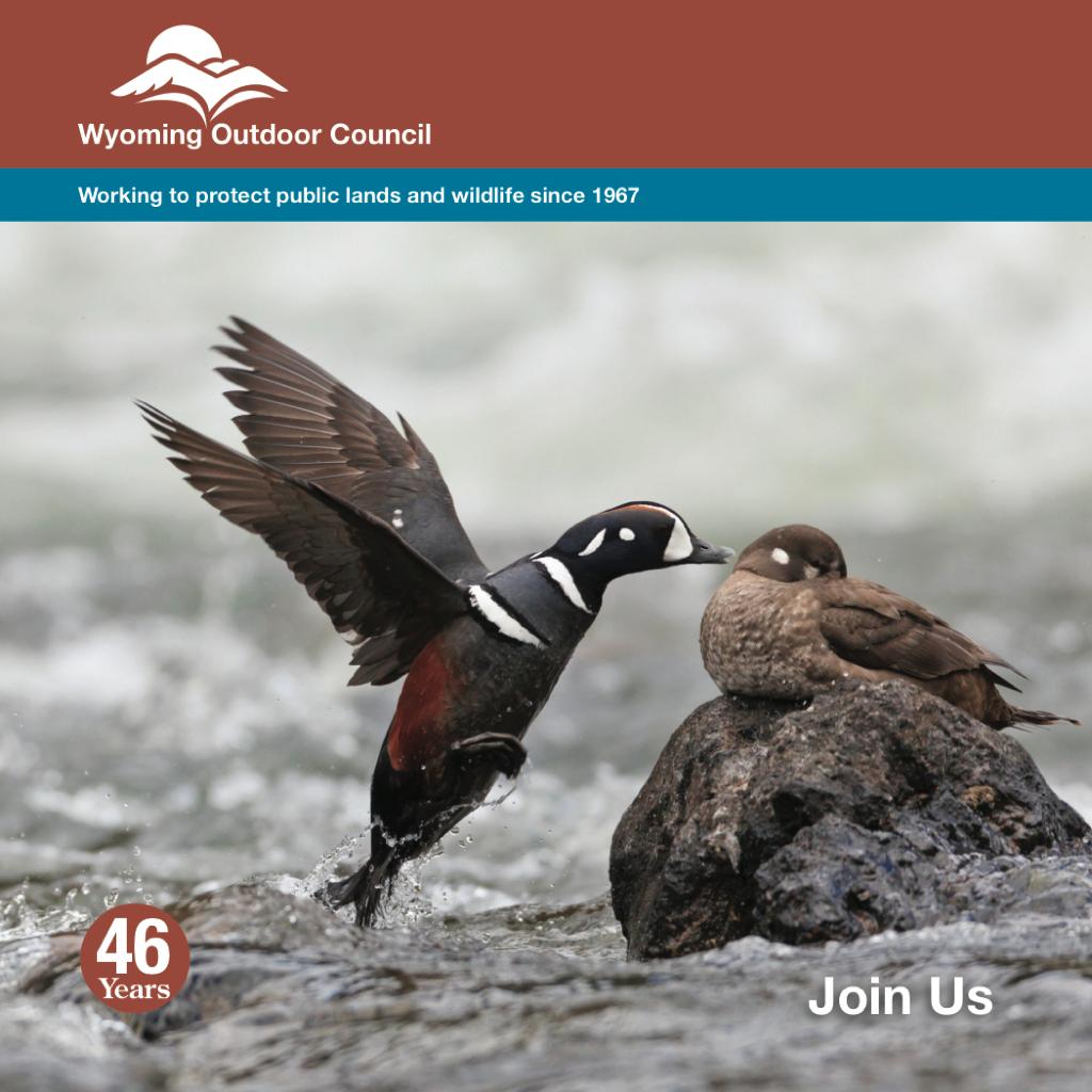 The Wyoming Outdoor Council calendar photo contest: Outdoor Recreation