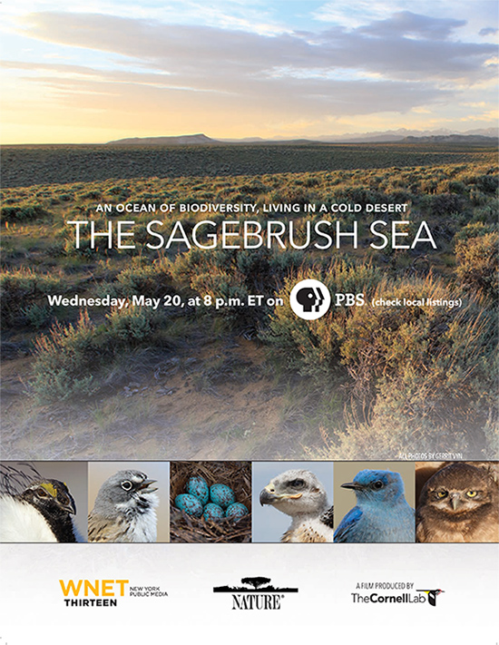 Join us to watch the new episode of Nature: The Sagebrush Sea on PBS