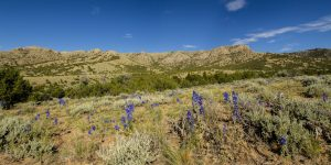 Last chance to comment on important Fremont and Natrona County public lands