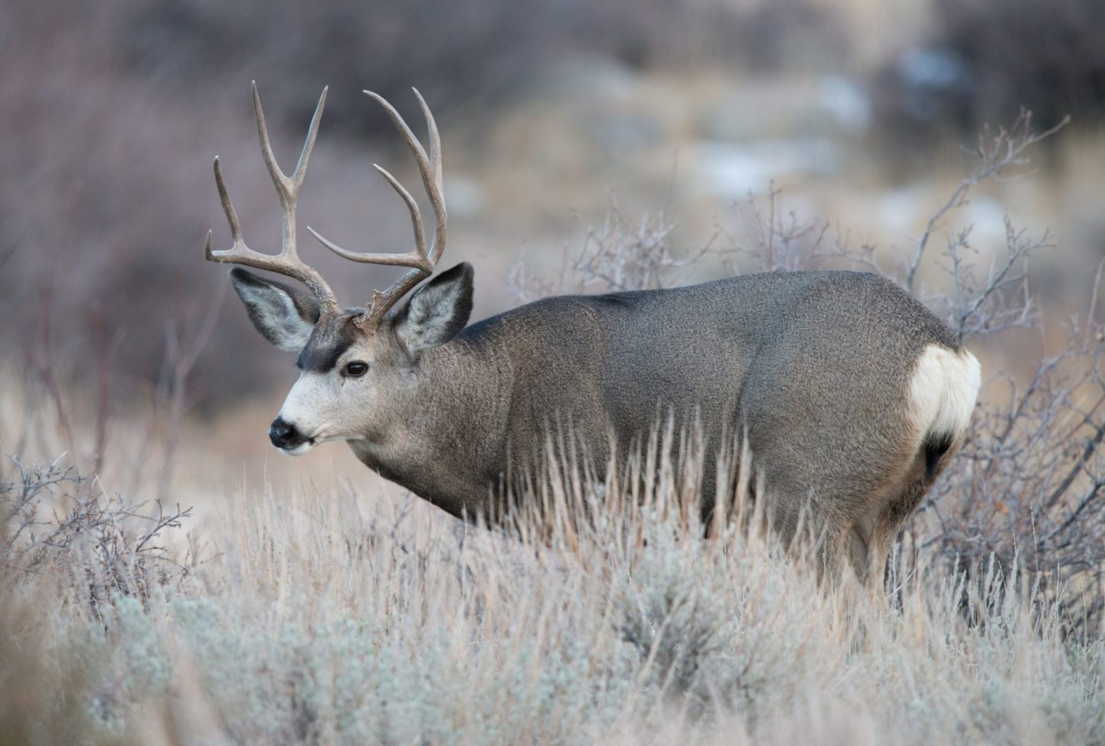 What's next for Wyoming's big game?