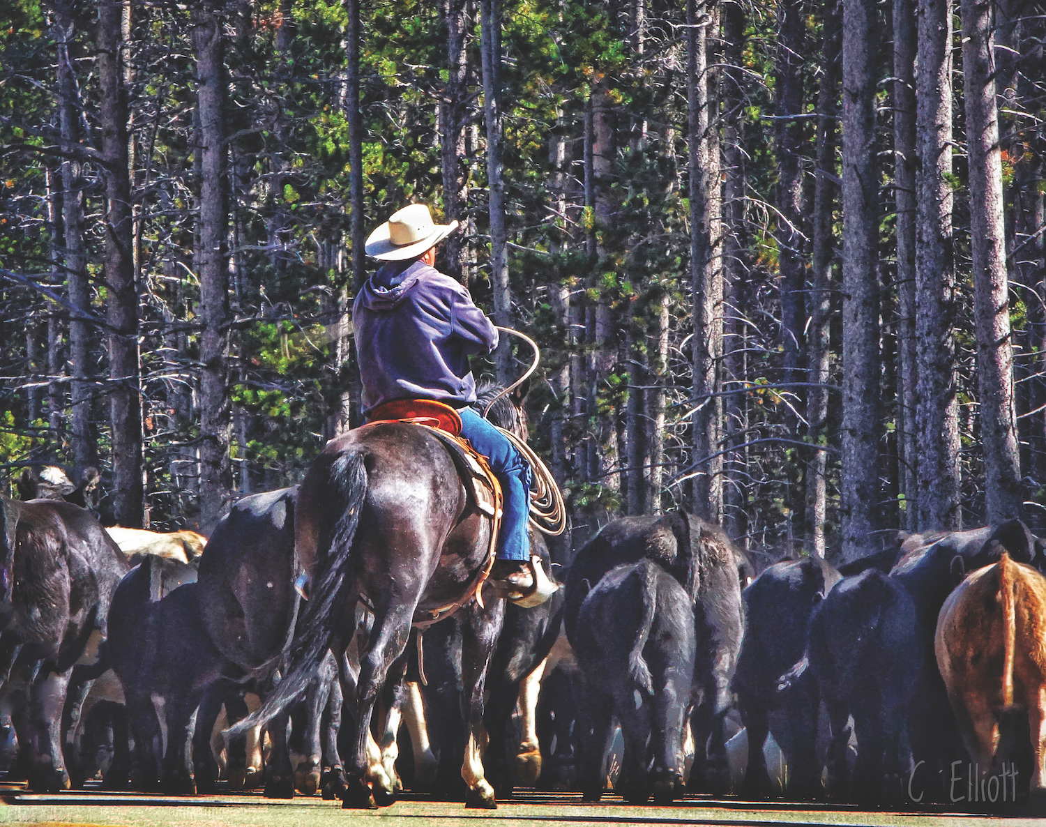 "Story behind the photo: ""Cattle Drive"" by Cheryl Elliott"