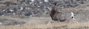Field Notes: December updates from the Wyoming Outdoor Council