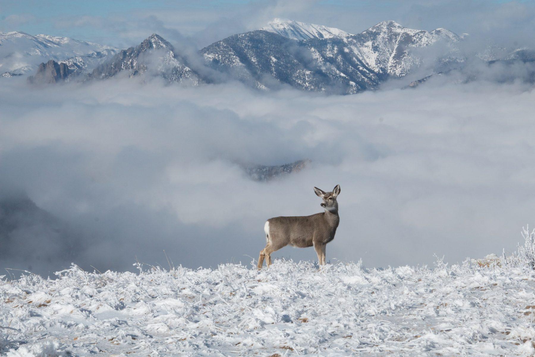 LUCAS SCHWANDT: Wyoming needs leaders