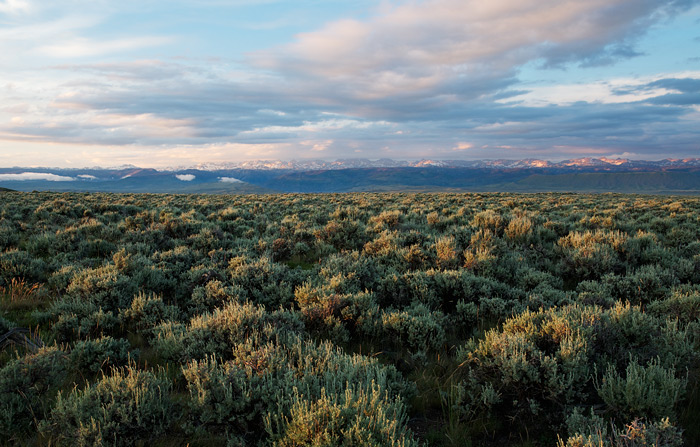 Public Lands Lease Report: Wild Speculation in Wild Places