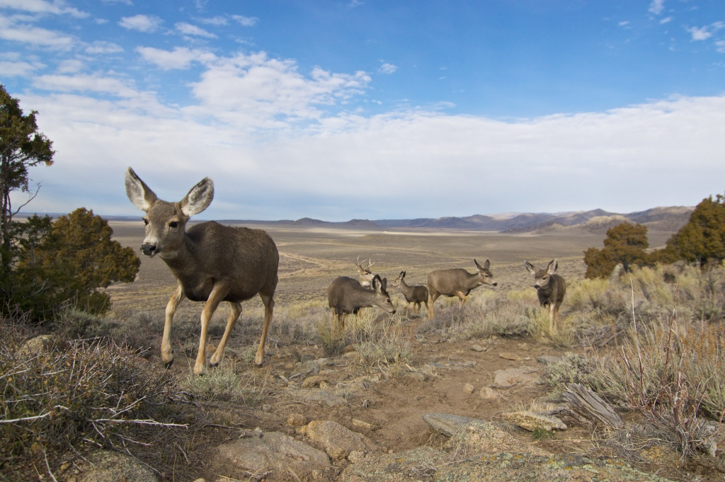 Wyoming poised to safeguard big game migrations