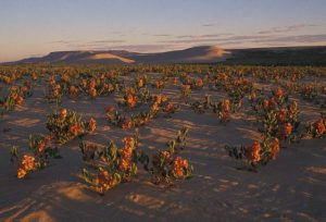 A federal land use plan may have drastic impacts on southwest Wyoming. Here's how to prepare.